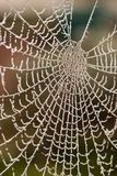 Frosty Web Stock Photos