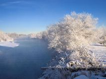 Frosty white trees by river. Scenic view of frosty white trees in snowy countryside by river with blue sky background Royalty Free Stock Photos