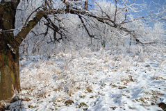 Frosty white winter landscape Royalty Free Stock Photo