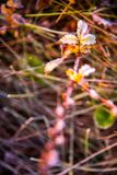 Frosty meadow in morning light, vertical. Frosty wild meadow, nature background Royalty Free Stock Photography