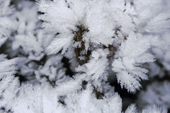Frosty winter backgrounds Stock Photo