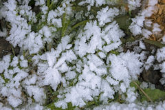 Frosty winter backgrounds Stock Photos