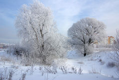 Frosty winter day Royalty Free Stock Images