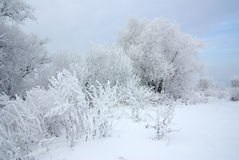 Frosty winter day Royalty Free Stock Photo