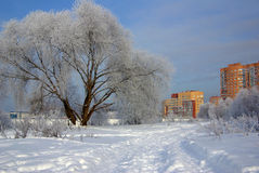 Frosty winter day in city Royalty Free Stock Image
