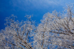 Frosty winter day Royalty Free Stock Photos