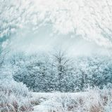 Frosty winter day landscape with Snow covered trees and grass Stock Photos