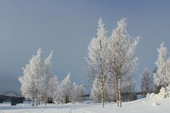 Frosty winter day in Luleå Royalty Free Stock Photo