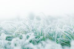 Free Frosty Winter Garden Macro. Cold Weather Background Concept. Frozen Grass On The Meadow With Copy Space Stock Photo - 196073030