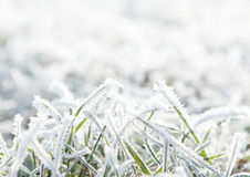 Frosty winter grass. Frosty background with copy space Royalty Free Stock Photo