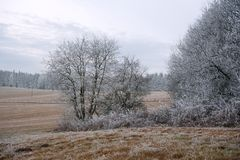 Frosty winter landscape Stock Images