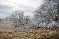 Frosty winter landscape Royalty Free Stock Photos