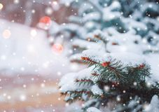 Free Frosty Winter Landscape In Snowy Forest. Pine Branches Covered With Snow In Cold Winter Weather. Royalty Free Stock Image - 101299196