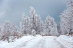 Frosty winter landscape Stock Photography