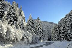 Frosty winter landscape in snowy forest. Beautiful winter forest landscape photo royalty free stock photos