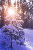 Frosty winter landscape in snowy forest Stock Photos