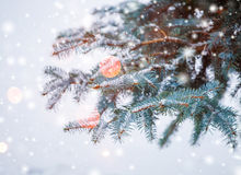 Frosty winter landscape in snowy forest. Pine branches covered with snow in cold winter weather. Christmas background with fir Royalty Free Stock Image