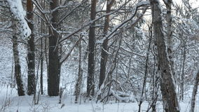 Frosty winter landscape in snowy forest. Winter road , forest with pine trees. Panorama of winter forest with trees stock video footage