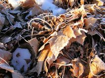 Frosty Winter Leaf Pile. A pile of frosty, dried winter leaves are beautiful in texture and color Stock Photography