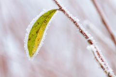 Frosty winter leaves abstract Royalty Free Stock Images
