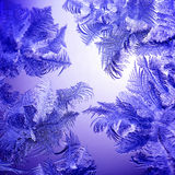 Frosty winter lilac pattern Stock Photos
