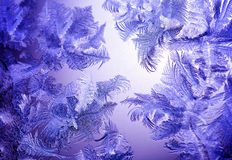 Frosty winter lilac pattern Stock Image