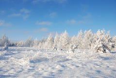 Frosty winter meadow. In Estonia Royalty Free Stock Image