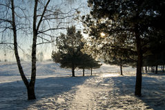 Frosty winter morning Royalty Free Stock Photo