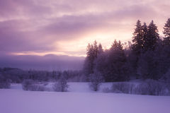 Frosty winter morning. Forest where sun peeks between clouds and paints them with vivid colors Royalty Free Stock Photo