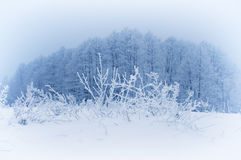 Frosty winter morning. Royalty Free Stock Photography