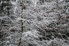 A frosty winter morning. Frost on the trees and bushes.  royalty free stock photo