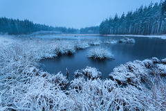 Frosty winter morning over swamp Royalty Free Stock Photography