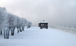 frosty winter morning on the riverbank.  observation deck covered with snow. Thin branches of trees covered with frost. Royalty Free Stock Image