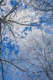 Frosty winter morning Royalty Free Stock Photography