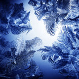 Frosty winter pattern Stock Images