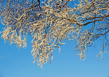 A frosty winter scene Stock Photography