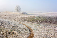 Frosty Winter scene Royalty Free Stock Photo