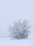 Frosty winter shrub Royalty Free Stock Image