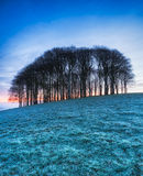 Frosty Winter Sunrise Royalty Free Stock Photos