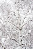 Frosty winter tree Royalty Free Stock Photo