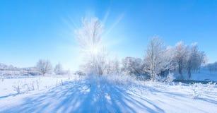 Frosty winter tree Stock Photo