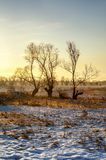 Frosty winter tree illuminated by the rising sun., with beautiful sunny skies Royalty Free Stock Photos