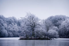 Frosty winter tree landscape on a lake Royalty Free Stock Photo