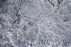 Frosty Winter Trees Branches Background Photo libre de droits