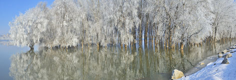 Frosty winter trees Royalty Free Stock Photography