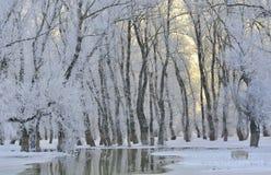 Frosty winter trees Stock Photos