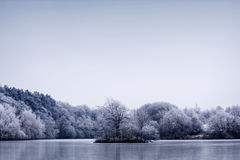Frosty winter trees landscape against a blue sky Royalty Free Stock Photography