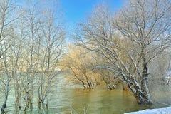 Frosty winter trees. Near Danube river Stock Photo