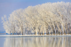 Frosty winter trees. Near Danube river Stock Image