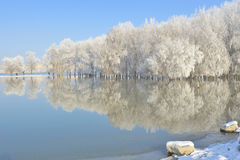 Frosty winter trees Royalty Free Stock Photos